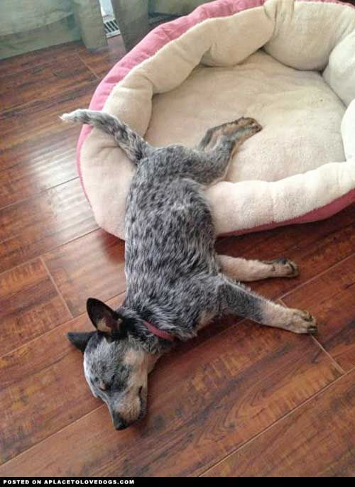 "Typical ACD. A move Diesel is familiar with technically ""in the bed"" but pushing the envolope lol"