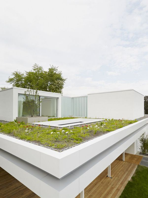 Acoperis verdeArchitecture Buildings, Green Rooftops, Rooftops Gardens, Gardens Decor, Housesmodernroof9Jpg 8251100, Christ Christ, Association Architects, Modern Home, Roof Gardens