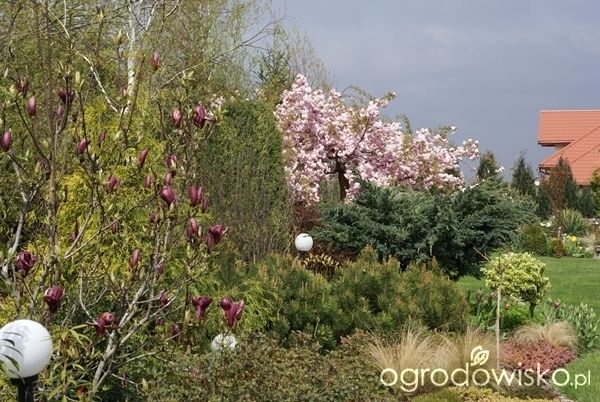 Wizytówka - Ogród mimo woli - Forum ogrodnicze - Ogrodowisko