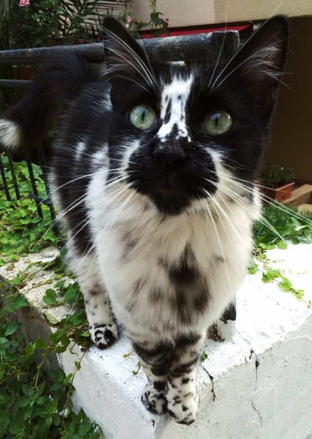 Vysledek Obrazku Pro Cats With Unusual Markings Kocky Nezvykle