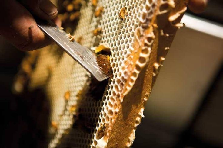 Fact #112: Did you know in Egypt between 2600 and 2200BC, honey was the most common medicine used? We're always fascinated by what an incredible history honey has!