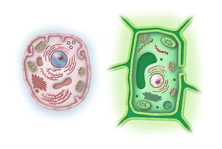 Marco Vaglieri • Animal and vegetable cells, 2004 (in collaboration with M2 studio, Milan)