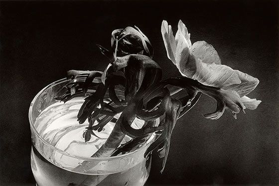 anemona de Pilar Pequeño