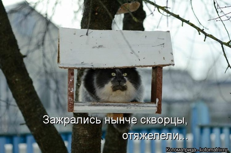 Скворец: Birdhouses, Awesome Animal, Funny Cat Photo, Birds Food, Pet, Birds House, Crazy Cat, Funny Animal, Blog