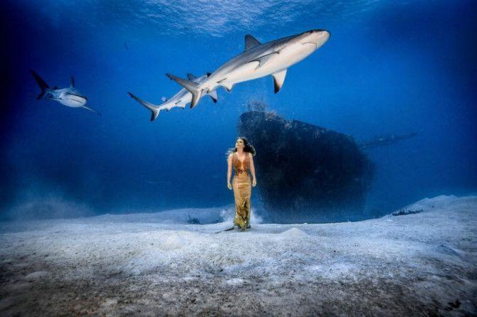 바닷속 공포의 존재로 알려진 상어 무리 속에서 이뤄진 대담한 수중 사진 프로젝트가 관심을 얻고 있다.산소탱크 같은 잠수 장비 없이 아름다운 드레스 차림으로 바닷속에 들어간 여성은 브라질 모델이자 동물 보호 운동가로 활동 중인카리나 올리아니(Karina Oliani)이다.상어 떼들이 가까이 다가와 주변을 맴도는데도 자연스럽고 우아한 포즈를