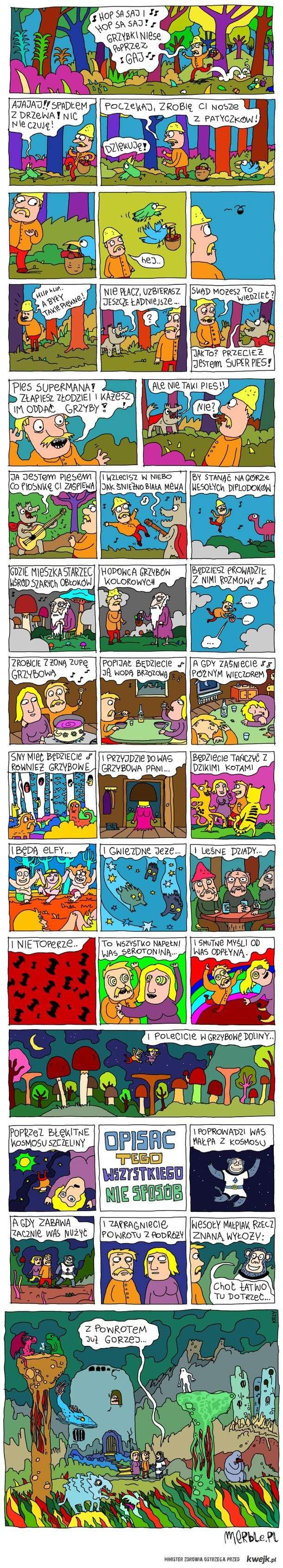 Historia o pewnych grzybach