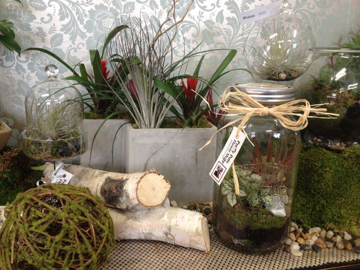 Hanging glass orb's, Terrariums and Concrete planters at Pretty Pots