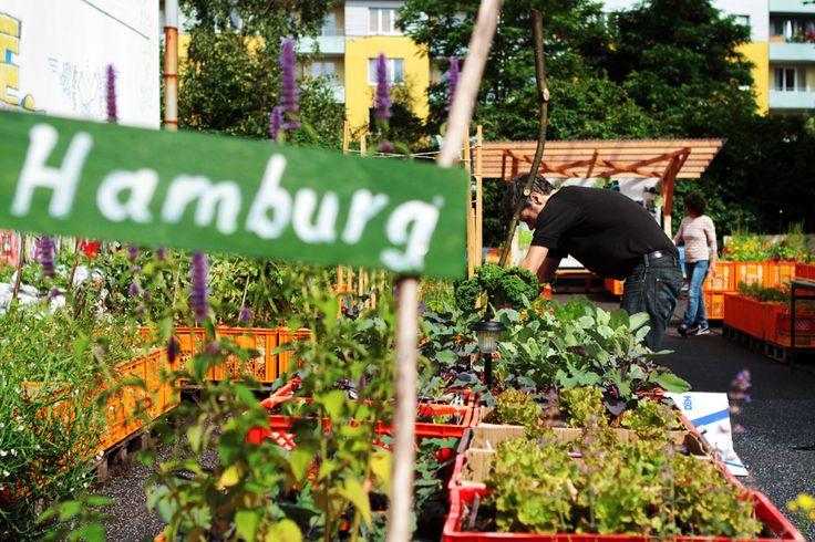 109 best world urban gardens images on pinterest urban farming amsterdam and apartment gardening. Black Bedroom Furniture Sets. Home Design Ideas