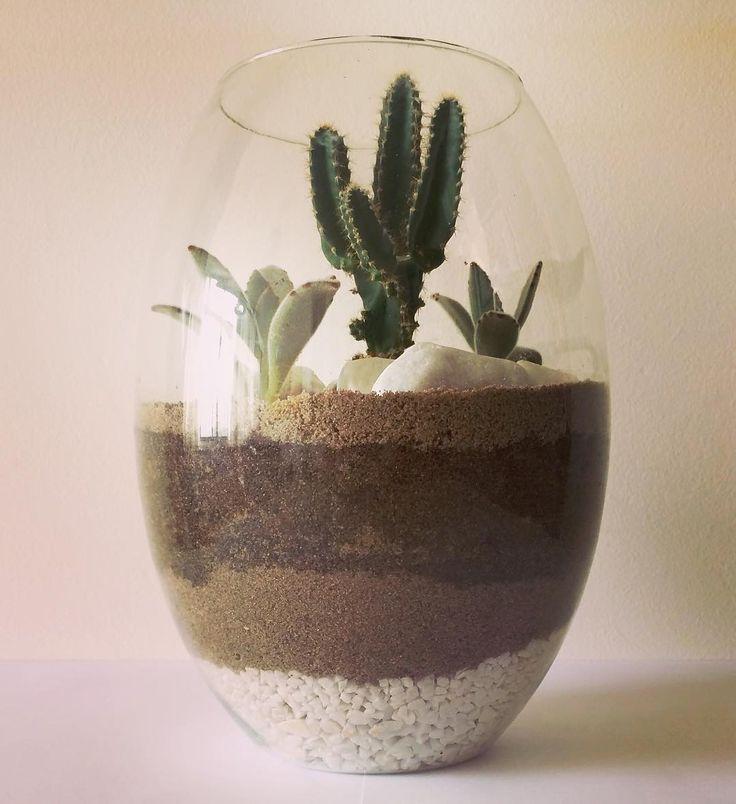 """Este terrário foi concebido com """"Cacto Castelo de fada"""" (Acanthocereus tetragonus) com duas suculentas """"Orelha de gato"""" (Kalanchoe tomentosa) criando um cenário de um deserto baseado na moda Folk para uma loja.  Mais informações e encomendas pelo site e whatsapp.  #germinar #verde #paisagismo #paisagismobrasil #suculentas #suculenta #succulent #succulents #succulove #cactus #cactuslover #cactusandsucculents #vaso #ceramica #pedras #vasospersonalizados #vidro #arte #terrario #terrarios…"""