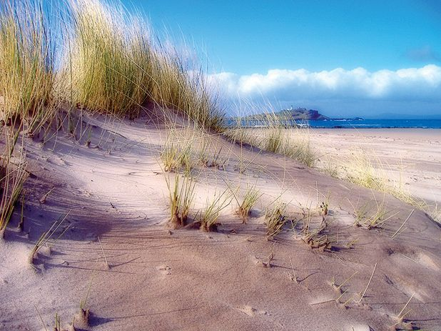The best beaches near Edinburgh  Pease Bay, West Sands, Yellowcraigs and Gullane beach among highlights