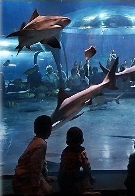 Oklahoma Aquarium, TULSA (Jenks,OK)