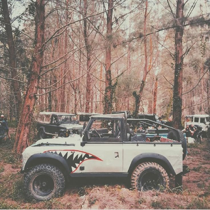 Defender shark is king of the forest. #overlandkitted @shaunwhee