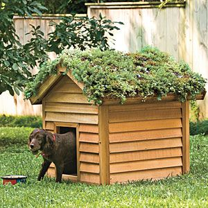 Instructions on how to build a living roof... and I think reusing old wooden pallets (ala the vertical garden trick) might work nicely here!