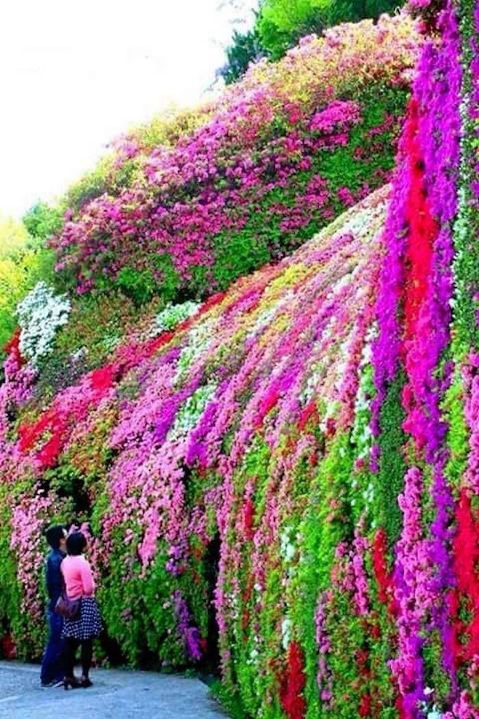 incroyable mur de fleurs suspendues et de plantes retombantes