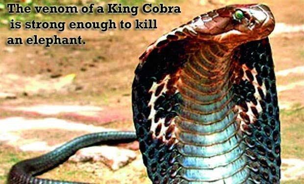 Interesting Facts About Garden Snakes | 10 Interesting And Amazing Facts About Snakes2