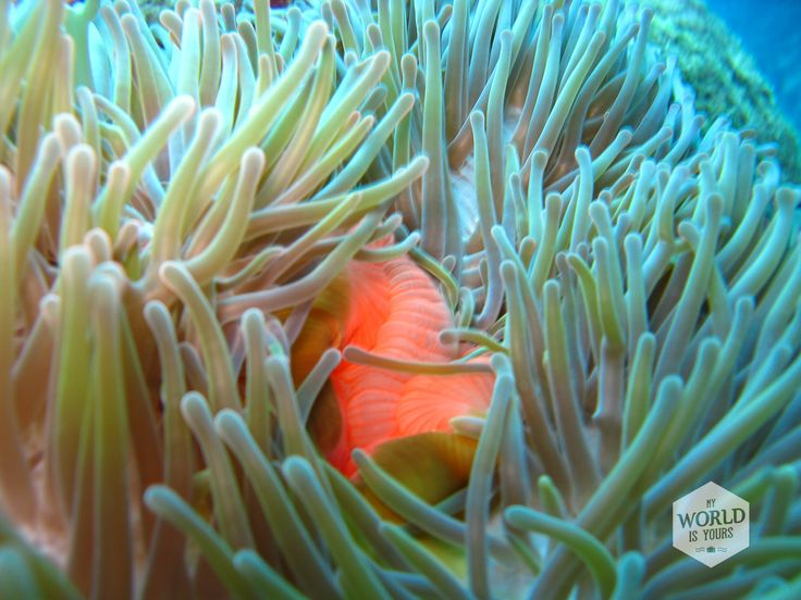 Colorful coral we saw during a dive in the Great Barrier Reef.