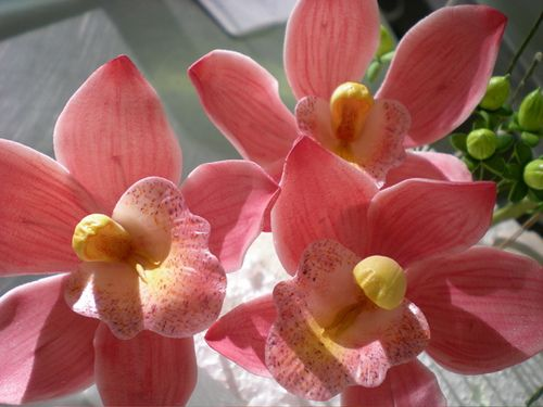 sugar orchids inspirations