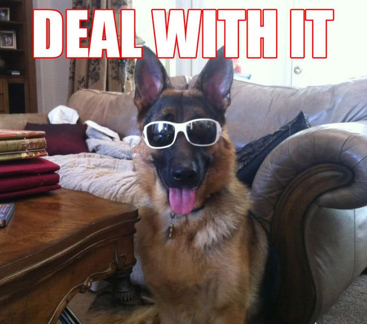 31 Best Images About German Shepard On Pinterest