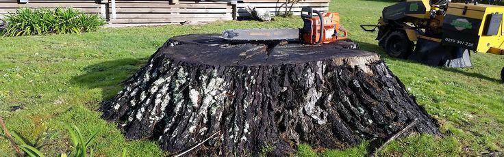 Stump Grinding & Removal Hamilton Tree removal, Tree
