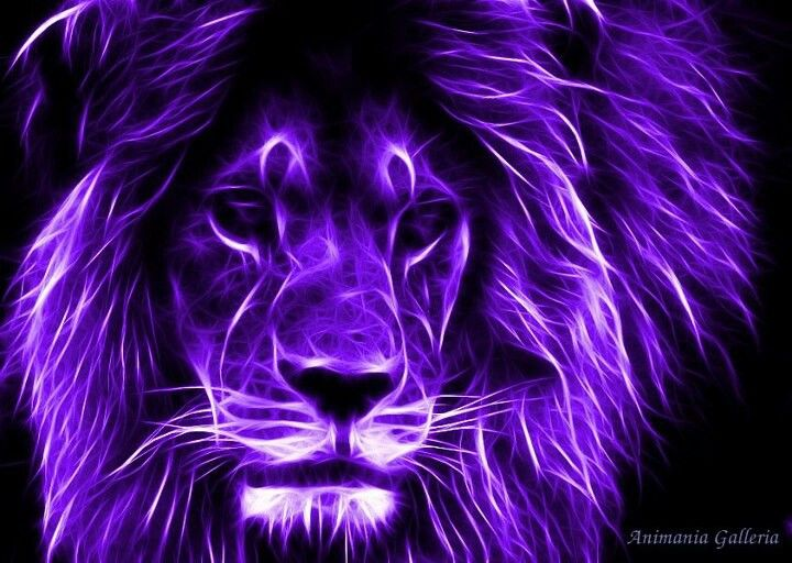 Beautiful Purple Lion!