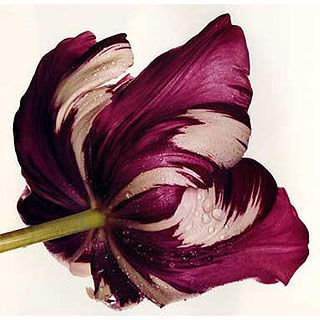 Photo by Irving Penn.