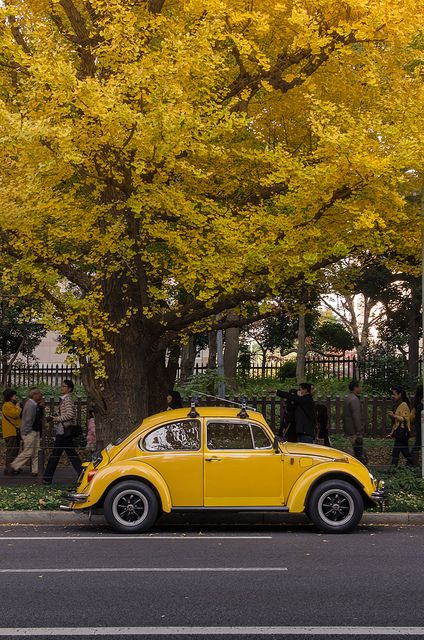 "My dream car has always been a classic beetle. @Vanessa Vasquez @priscilla mercado - remember grandpa had his and he called it(and Tib) ""Bocho""?lol"
