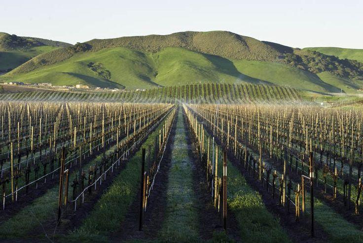 Los Alamos Vineyards in Santa Barbara - an absolutely stunning winery. #winery #winemaking #winelovers #wine #vineyard