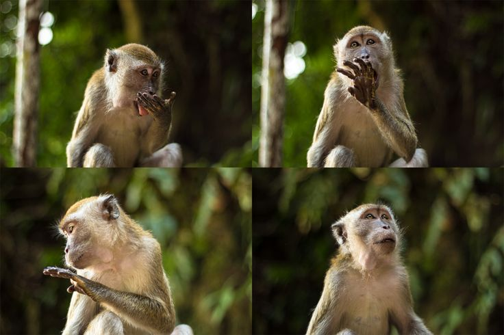 Super cute monkeys at Batu Caves in Kuala Lumpur, Malaysia  More photos at http://www.asiatiq.com/super-cute-monkeys-batu-caves-kuala-lumpur/