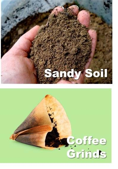 If your soil is too sandy, the residue from your morning brew will add organic matter and nutrients while increasing water capacity. The grounds also improve drainage in clay soil.