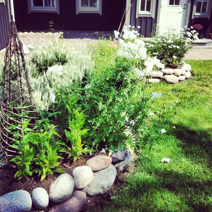 Upphöjd rabatt med vitblommande växter.