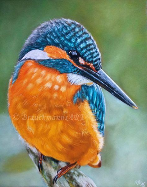 Kingfisher, Eisvogel, Tiere, Vögel, Tierportrait, Natur                                                                                                                                                      Mehr