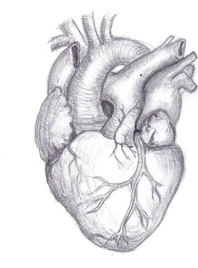 Pencil Sketches Heart