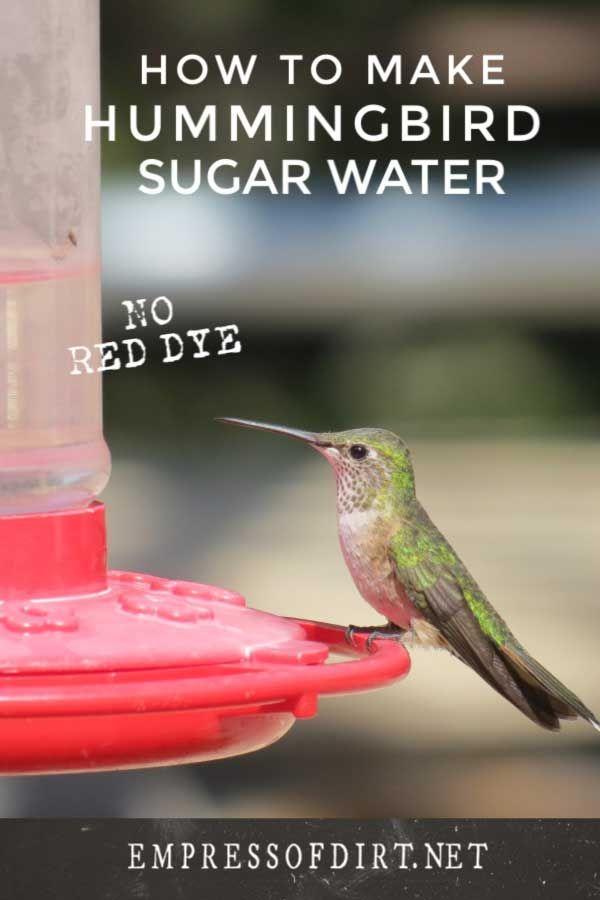 Hummingbird Nectar Recipe How To Make Homemade Hummingbird Food Hummingbird Nectar Recipe Homemade Hummingbird Food Hummingbird Food