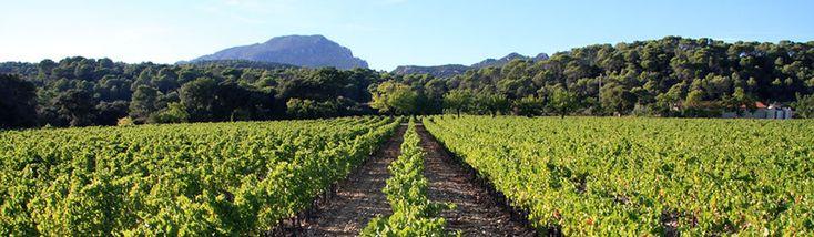 Vins du Languedoc Roussillon - Lavinia