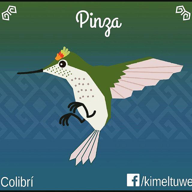 Pinza, colibrí en #mapudungun.