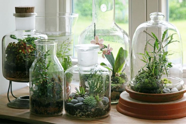Bottle Garden: Small ecosystem in the glass