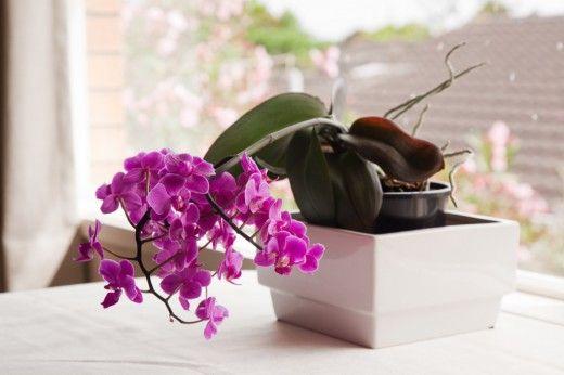 Полезные советы для тех, кто только начал знакомиться с орхидеями