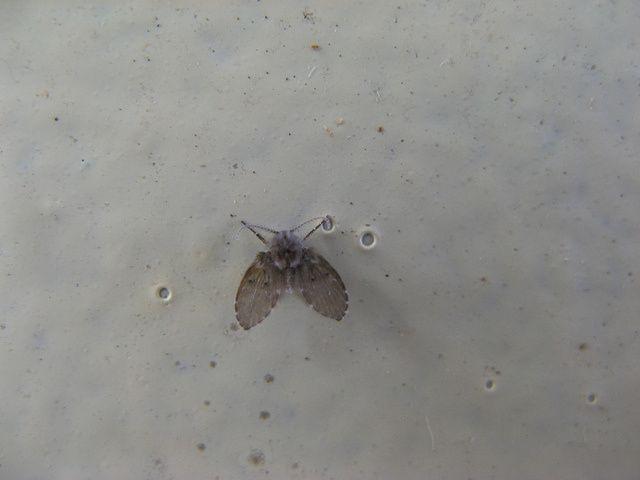 Small Flies In Bathroom Sink