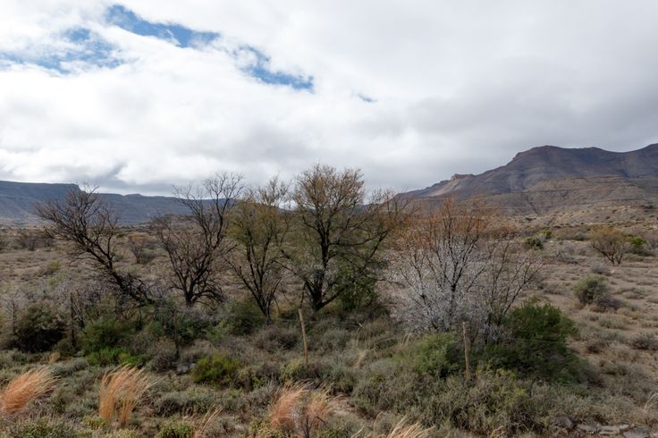 The Trees Grows All Around - Fraserburg Landscape  The Trees Grows All Around - Fraserburg is a town in the Karoo region of South Africa's Northern Cape province. It is located in the Karoo Hoogland Local Municipality.
