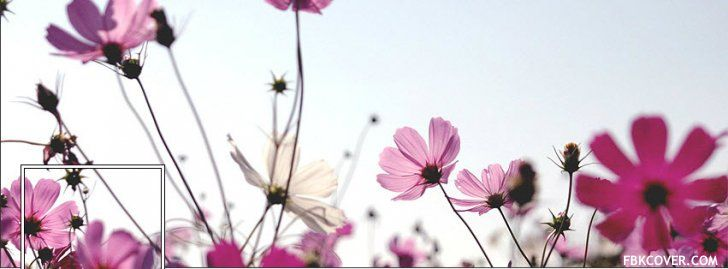 Purple Grass Flower Facebook Covers - Facebook Covers Photos ...