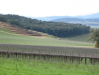 King Valley vineyards