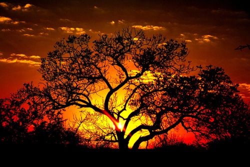 Kruger National Park, South Africa - Beautiful Image - Sunset Fire I LOVE Africa sunsets and sunrises ~ ! ~