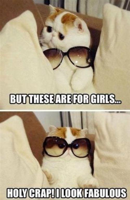 damn straight.Funny Cat, Cute Cat, Make Me Laugh, Kittens, So Funny, Kitty, Sunglasses, Fabulous, Animal