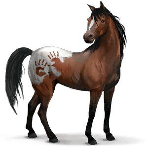 Novio, Divoký kůň Španělský Mustang #4259953 - Howrse