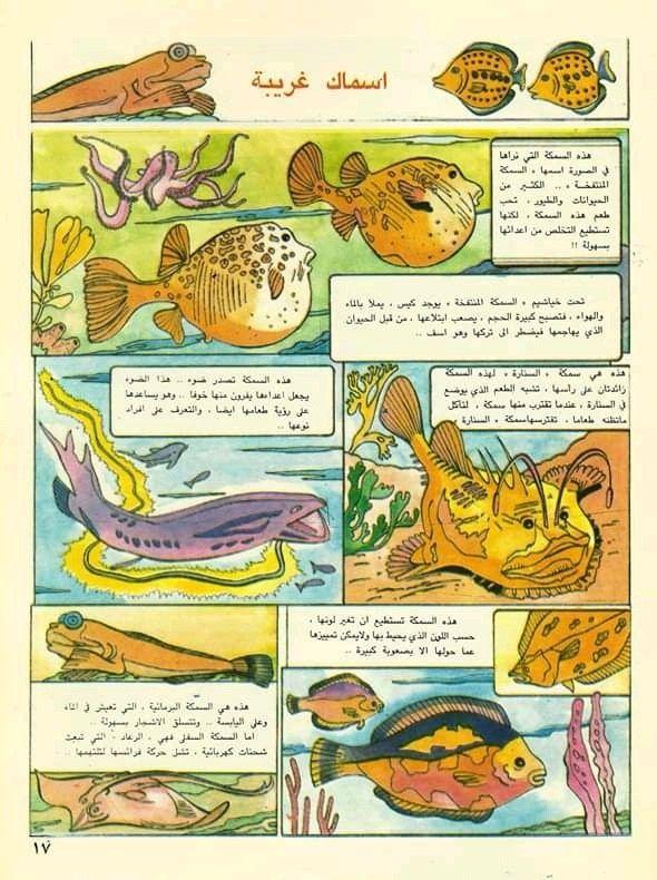 Pin By القراء On إصدارات دار ثقافة الأطفال العراقية Animals Turtle Rooster