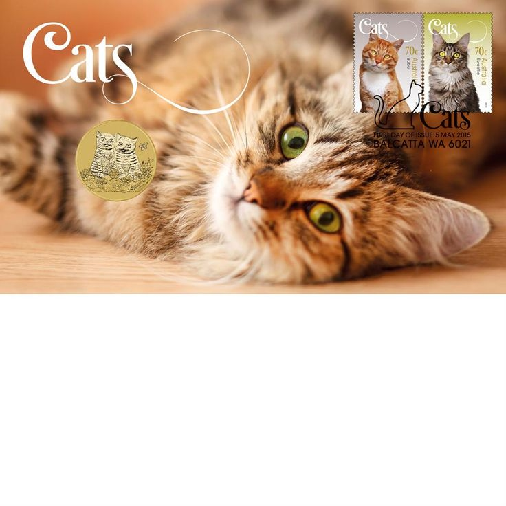 2015 Cats Stamp & Coin Cover Cats, Stamp, Cats, kittens