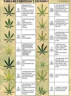 Si observas determinados síntomas, es probable que padezcas alguna de estas carencias y excesos en tu planta de cannabis. Te desvelamos como subsanarlas.