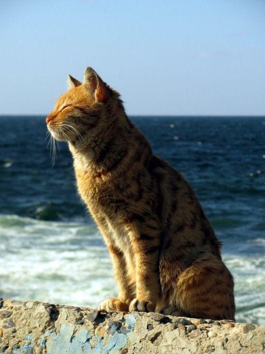 Aahhhhh that wonderful sea breeze!