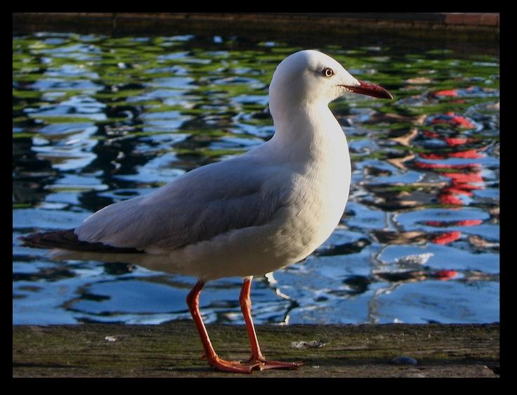 September Seagull