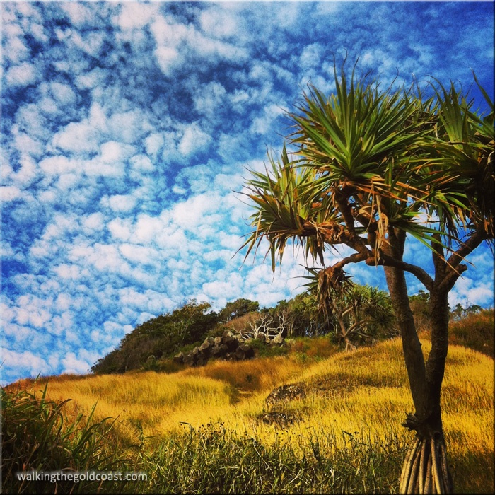 I took this while #walking #Burleigh Headland National Park.